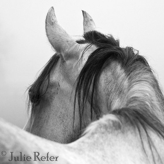 Title: Looking  This horse fine art photograph will be professionally printed on Fuji Pro Digital Crystal Archive paper.  Buy this in full size format here https://www.etsy.com/listing/71143509/black-friday-sale-horse-photography?