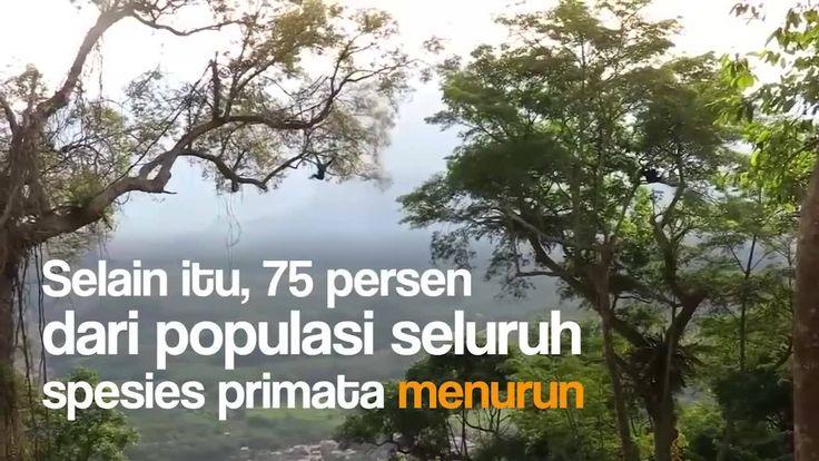 Ini peringatan serius. Diperkirakan 60 persen dari total spesies primata dunia terancam punah. Seperti apa? Tonton videonya di sini: http://detik.id/6scTUj  Via: 20detik