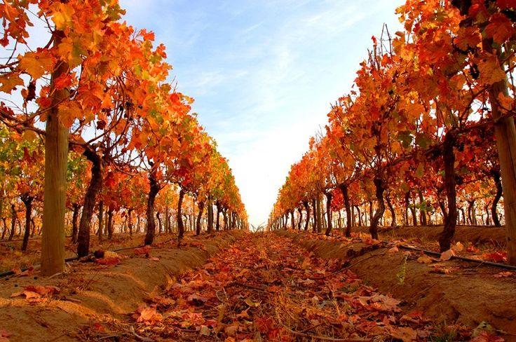 Colchagua es un angosto valle agrícola, cuya atracción turísticas es la actividad vitivinicultora, la cual incluye trece bodegas productoras de vinos tintos y blancos, reconocidos internacionalmente por su excelente calidad. Esta provincia Chilena es una de las tres de la Región del Libertador General Bernardo O'Higgins, junto con las provincias de Cachapoal y Cardenal Caro. Su capital provincial es la ciudad de San Fernando. #ChileLindo