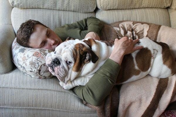 English Bulldog Love--just like Moo