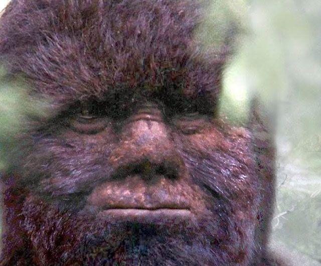 Todd Standings Bigfoot Sightings | Paranormal Central Bigfoot Report for 3-30-2014