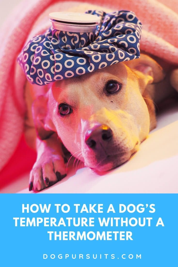 Tips On How To Take A Dog S Temperature Without A Thermometer Dog Temperature Dogs Dog Illnesses