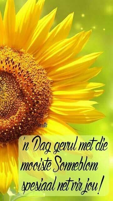 """""""En un día lleno del más hermoso girasol, Especialmente para ti!""""   Sonneblom dag!"""