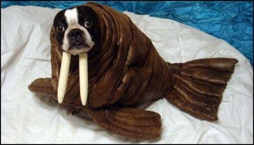 Hundekostüm Walross