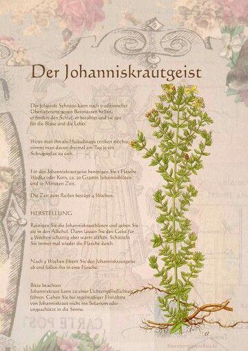 Johanniskrautgeist