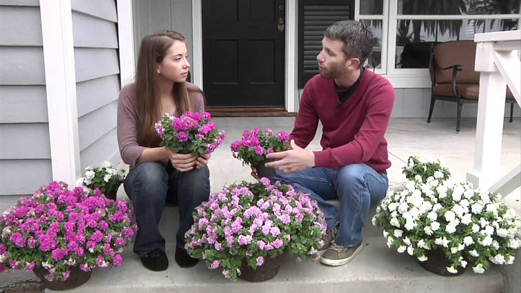 Surfinia Summer Double Petunias: Plant Up Your Front Steps!