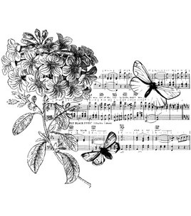 Butterfly Suite-Penny Black