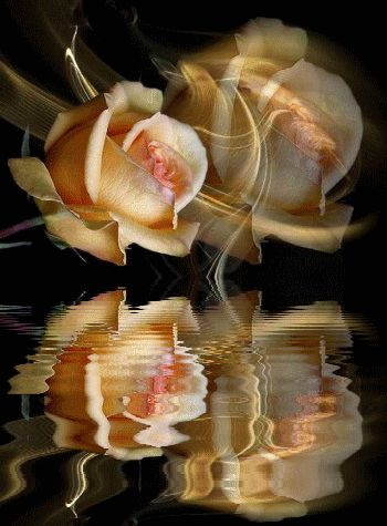 1000+ images about Roses/Reflections on Pinterest | Te amo ...