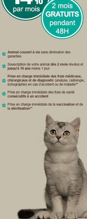 Assur O'Poil, l'assurance santé des chiens et des chats