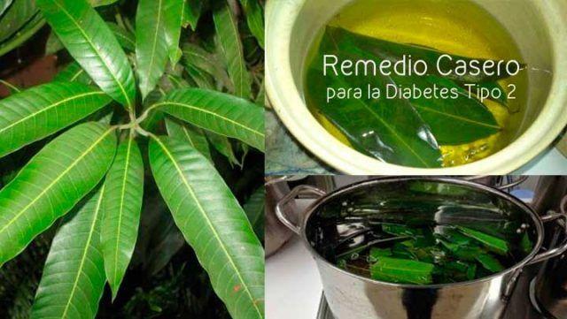 hojas-de-mango-diabetes