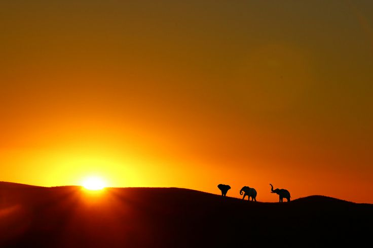 Elephants in Namibia by Jonas Schroeter