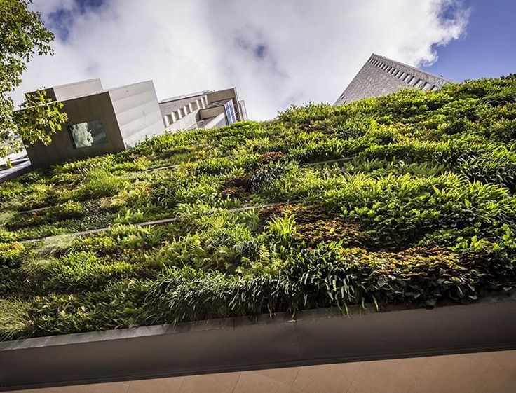 The #verticalgarden at #triptychapartments in #melbourne. #architecture by @nettletontribe with green wall by #fytogreen. The unique experience swimming in the residents pool which cantilevers over the footpath.  #rcpvic #projectmanagers #landscape #pool #design