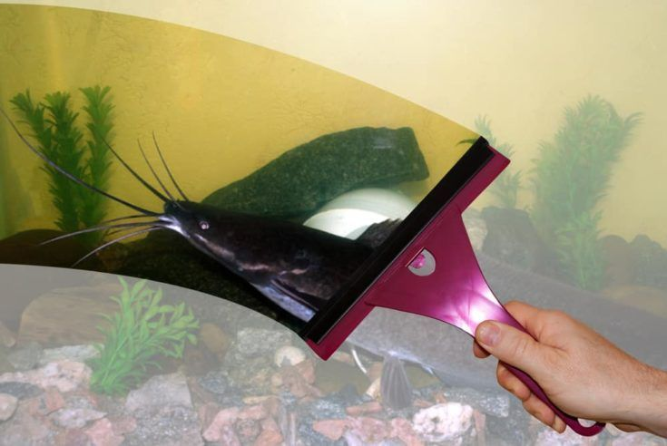 Pin On Aquarium Maintenance Tips
