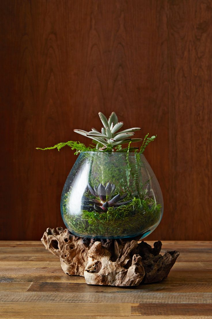 1119 best Terrariums - Beauty in a Glass images on Pinterest | Plants,  Aquarium and Balcony