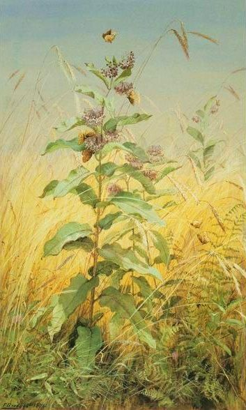 "Gurney Journey ""Milkweeds"" by Fidelia Bridges (1834-1923) watercolor and gouache on paper"
