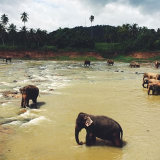 If you need to be near an adorable baby animal at all times, get yourself to Sri Lanka. | 16 Pictures That Will Make You Want To Move To Sri Lanka