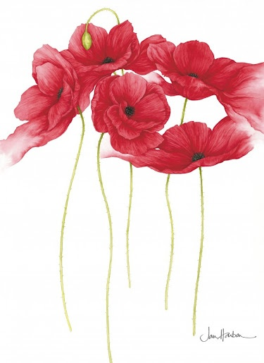 Botanical Illustration by Jan Harbon: Printable, Watercolor, Illustrations, Artist Jan Harbon, Poppies, Flowers, Painting, Tatoo
