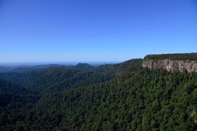 Canyon Lookout Springbrook