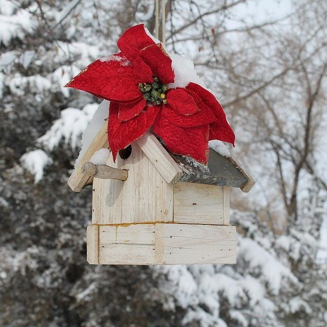 Co powiecie na świąteczny karmnik w ogrodzie? #wogrodzienajlepiej #święta #xmas #bozenarodzenie #karmnik #DokarmianiePtakow #Feeder #Bird