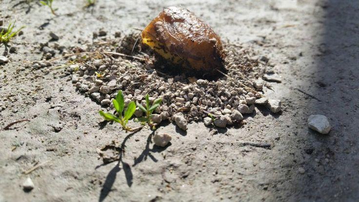 Dieser geniale Trick hilft gegen Ameisen im Haus. So rückst du diesen unerwünschten Gästen zu Leibe.
