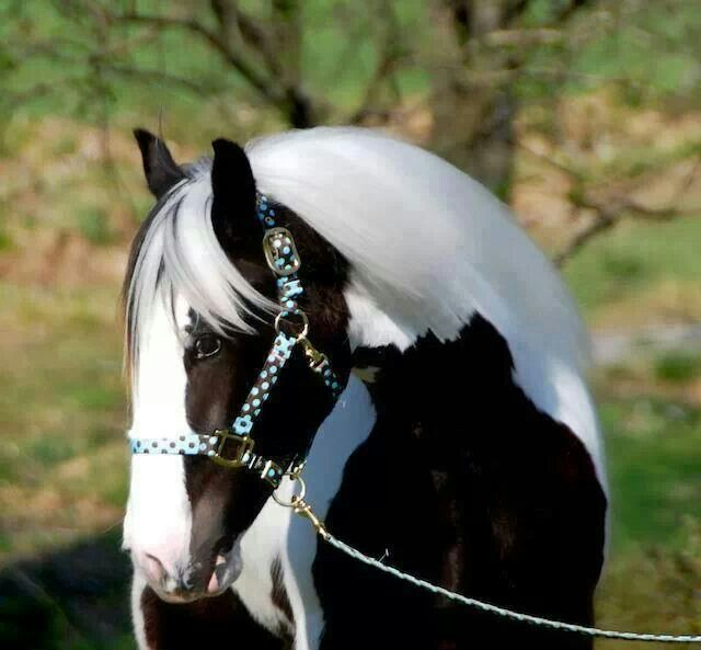 black pinto horse | Horses - Painted | Pinterest | Watches ...