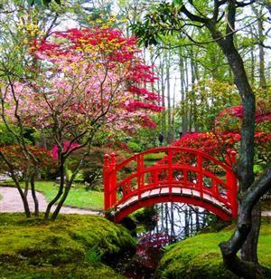 The Bridge ... Japanese garden in Clingendael Park, The Hague, Netherlands Pin