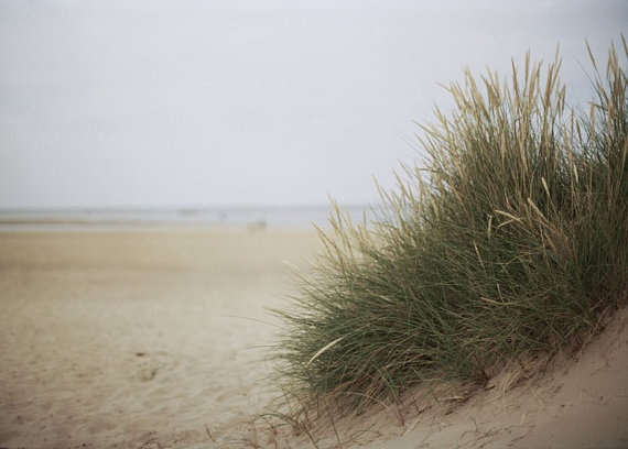 France Le Touquet   Beach Grass 10x8 inch  Photograph by TimIrving