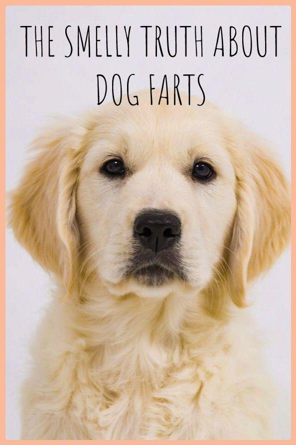 Why Do Dog Farts Smell So Bad Dog Farts Smelly Dog Dog Smells