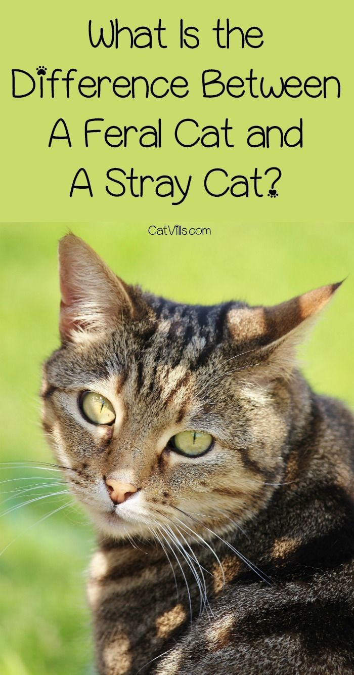 What Is the Distinction Between A Feral Cat And A Stray Cat