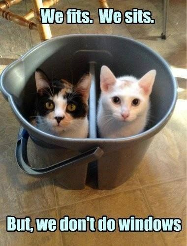 Two cats in the can.