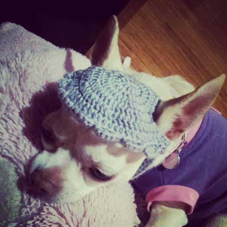 Crochet Chihuahua Hat Tutorial Crochet Dogs Pinterest