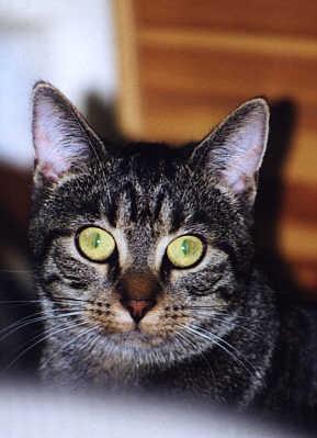 Unser Kater Willy, der leider viel zu kurz bei uns lebte und dann zu Sylvester nicht mehr zurück fand.