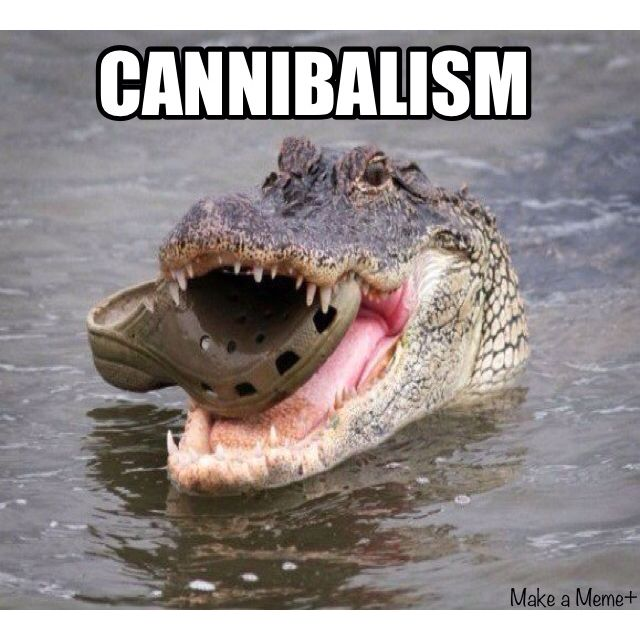 hahahahahaCannibal, Funny Things, Laugh, Random, Funny Stuff, Humor, Funny Animal, Croc Eating, Giggles