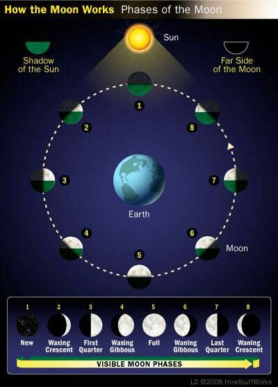 Moon phases article/chart