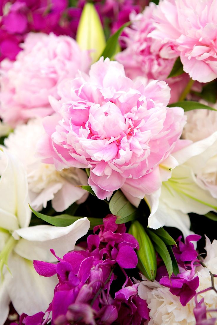 A favorite of many, the peony is a symbol of China, the