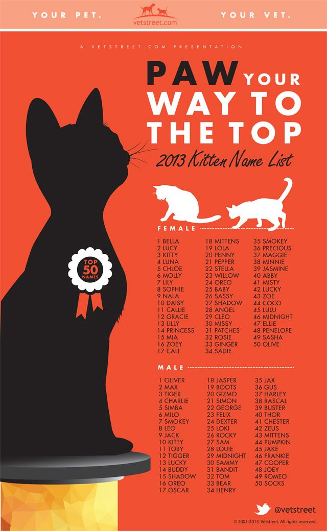 Most Popular Kitten Names 2013 Definitely a most interesting read - and what makes it so interesting is that someone takes the time to keep track of it all... lol