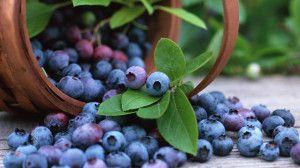 Alimentazione sana: ecco i 10 cibi più ricchi di proprietà benefiche per il nostro corpo