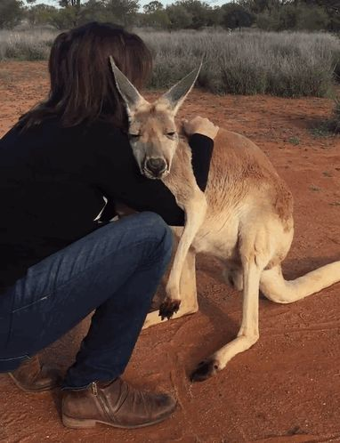 Rescued Kangaroo Hugs Her Rescuers Every Day, And The Internet Can't Handle It