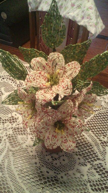 Flores mostacilla