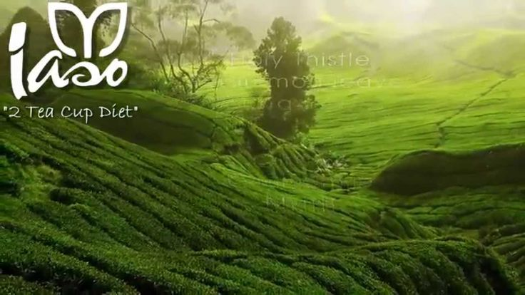 Iaso™ Tea Ingredient Video