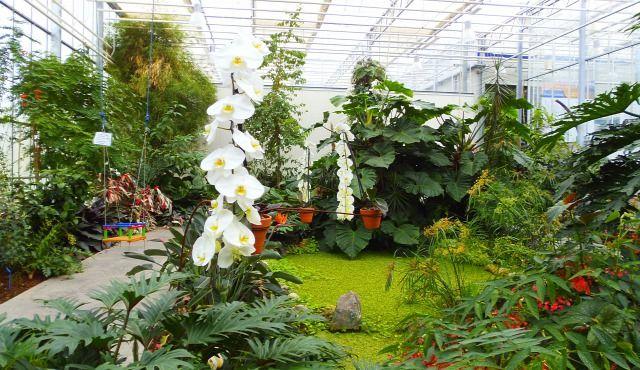 Egy pici falu, egy elvarázsolt erdő és 2 millió orchidea! - Egy az Egyben