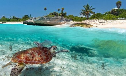 Things To Do In Key Largo - Deals in Key Largo, FL | Groupon