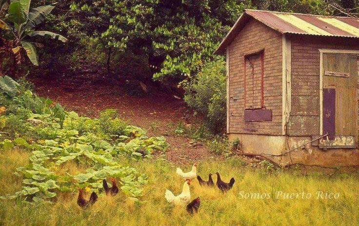 Casita en el campo de p r con sus gallinas en el patio - Casitas de campo ...