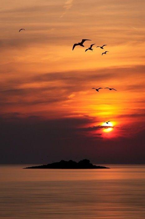 Bird Island by Albin Bezjak