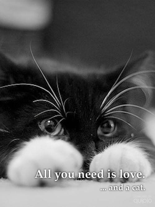 All you need is love!....and a cat. :)