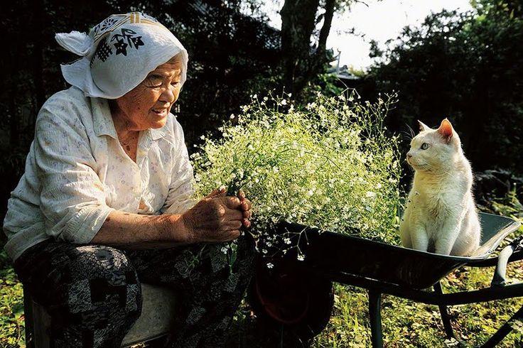 La complicidad de una abuela japonesa con su gato de ojos fascinantes
