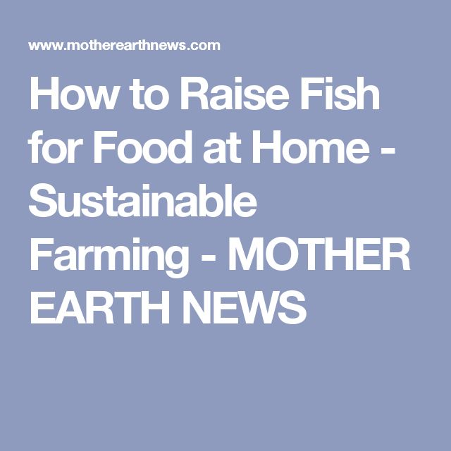 How to Raise Fish for Food at Home - Sustainable Farming - MOTHER EARTH NEWS