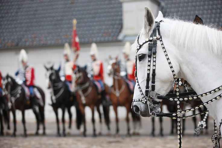 Galaxie posing in front of the regiment's colours.