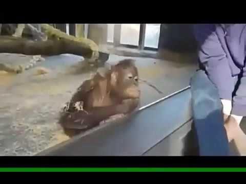 funny fun with animals  смешные приколы с животными - rollerfun видео рилики фильмы животные приколы интересное приключения