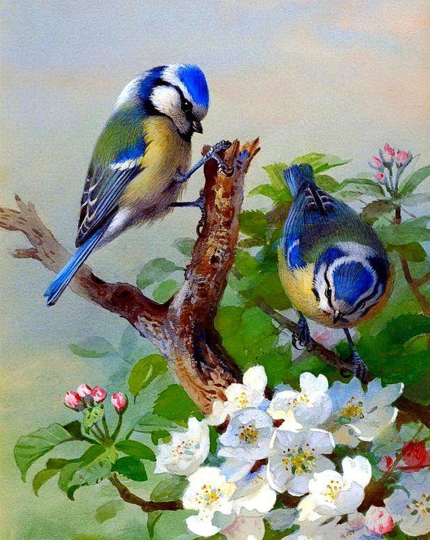 фотокниги картинки с изображениями птиц консилиуме хирургов одобрили